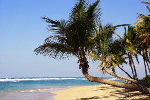 Dominikana - palmy